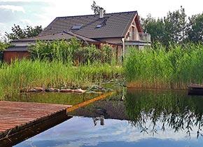 Schwimmteich Von Tauchner Natur Im Eigenen Garten
